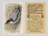 Useful Birds of America: White-Breated Nuthatch / Arm & Hammer Baking Soda, Cow Brand Baking...