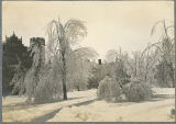 Trees in front of Denbigh Hall