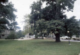 Campus lawn with trees and cars visible