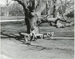 Woman with two dogs on the Bryn Mawr College campus