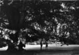 Students in Front of Gigantic Tree