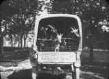 Dodge truck with load of goats (Chatel Chehery) / Dodge truck with load of goats