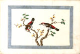 An Album of Chinese Watercolors of Birds