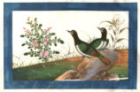 An Album of Chinese Paintings of Birds